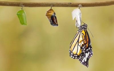 How Leaders Create an Effective Emergent Organizational Culture