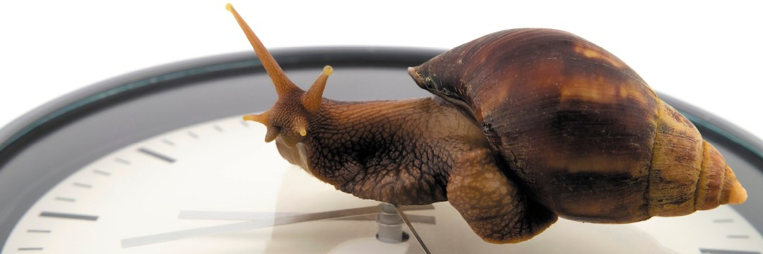 EDC Snail Filibuster Post