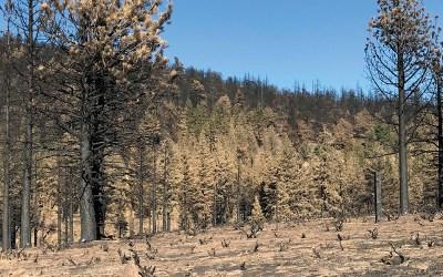 Population-Based Fire Planning