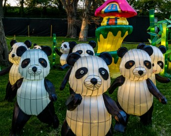 Pandas on the March