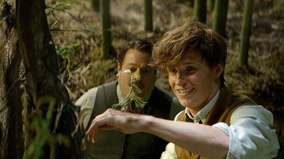 Image result for fantastic beasts and where to find them bowtruckle