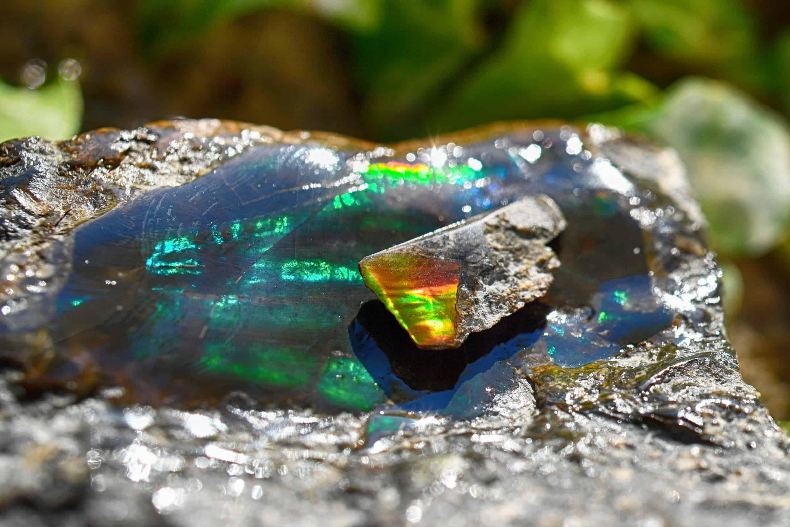 Blue Ammolite