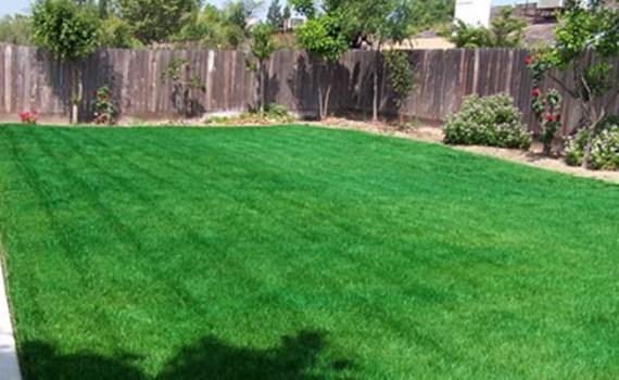 Gazon sec ou jaune, pelouse sèche ou jaunie, économiser l'eau, peindre