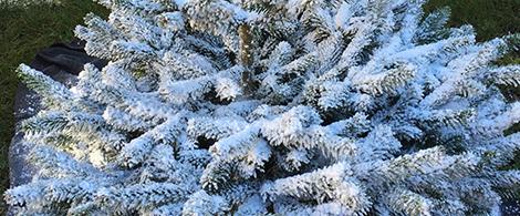 Décoration, effet neige, noël