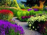 Beautiful-garden-Birmingham