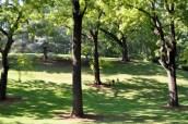 black walnut trees Montpelier, VA