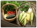 Food forest harvest