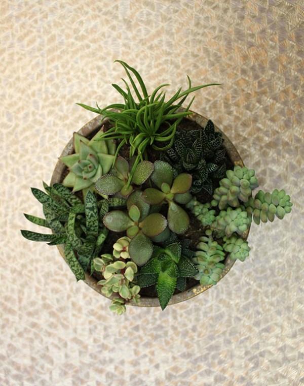 Succulents Mix