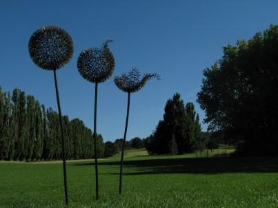 dandelions 1Mg