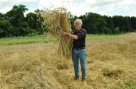 Big ole bundle of rye for future bread