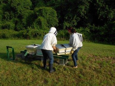 Bringing in the apiaries