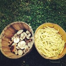Bounty harvest