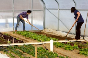 Katie and Amber prep a bed for transplants in the solar high tunnel.
