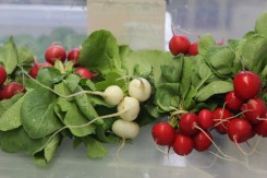 Red and white radishes.
