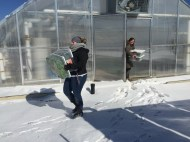 Melissa Nobbe and Cassandra Malis exit the solar high tunnel carrying tubs of freshly harvested greens, heading across the street to wash and pack them in the kitchen.