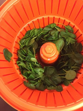 Dry spinach ready to be packed