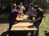 Participants pack the holes in the logs with spores
