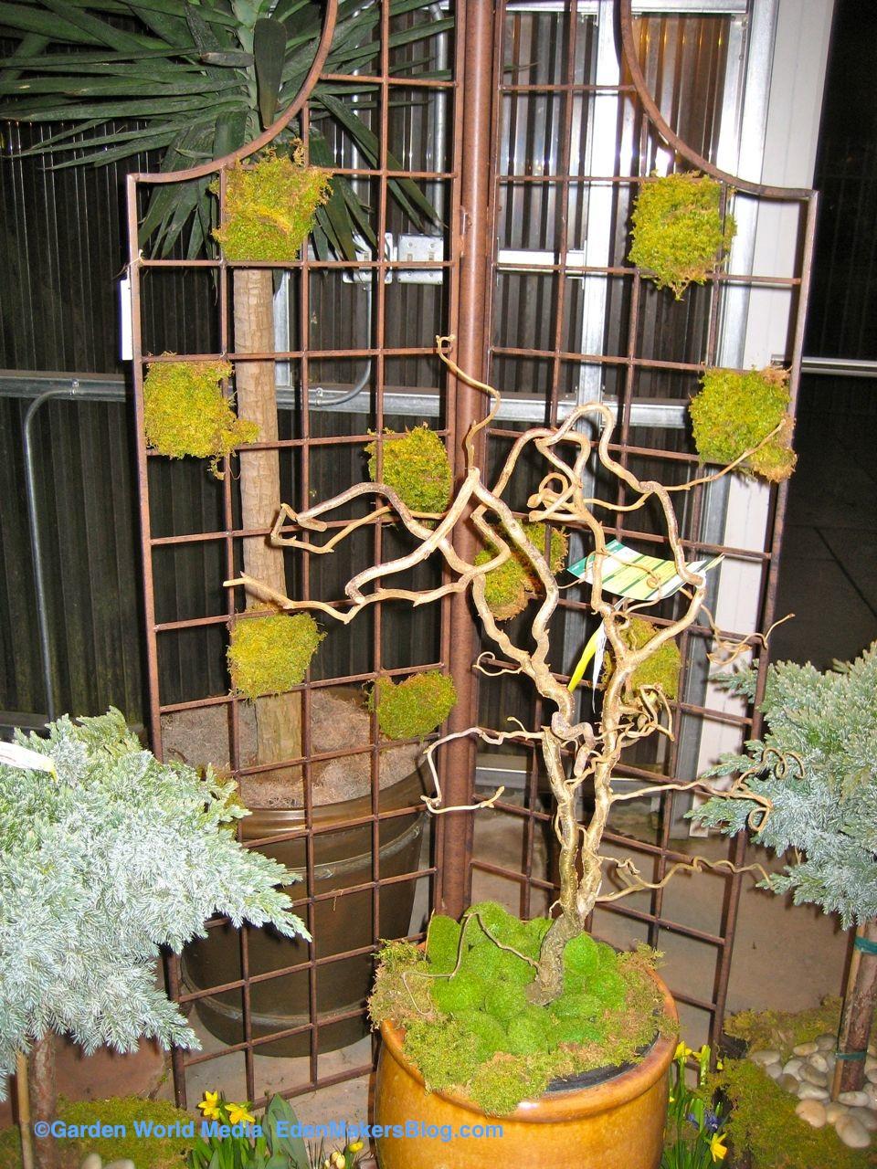 Metal trellis with checkerboard moss pattern in garden | Eden Makers ...