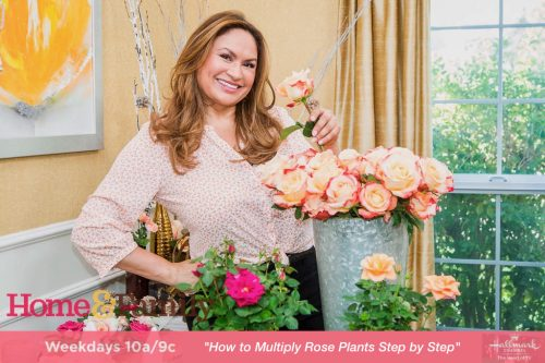how to plant a rose plant with Shirley Bovshow of the Home an Family show on the Hallmark channel