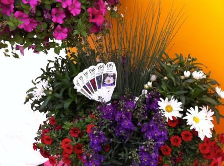 Proven Winners_Mixed_Planter_Arrangement
