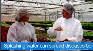 Shirley_Bovshow_How_Plants_Are_Bred_to_become_Proven_Winners_plants_with_chris_berg