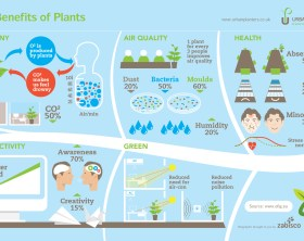 The-benefits-of-plants-edenmakers