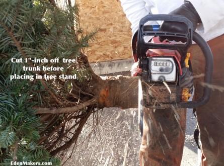 Fresh-cut-Christmas-tree-trunk-to preserve freshness edenmakersblog
