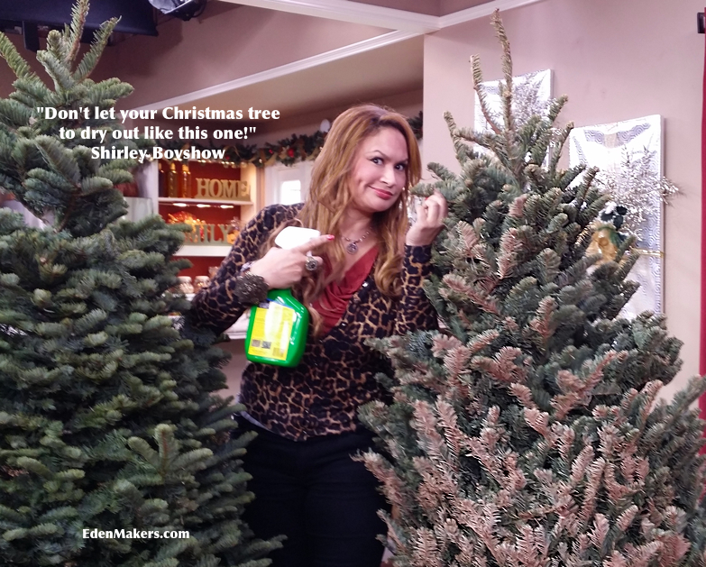 Tips For Keeping Your Christmas Tree Fresh | Eden Makers Blog by ...