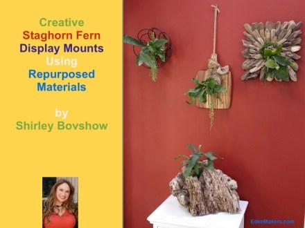 Creative-staghorn-fern-wall-display-shirley-bovshow