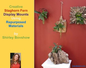 Creative-staghorn-fern-wall-display-shirley-bovshow