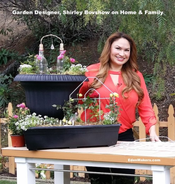shirley-bovshow-miniature-rose-garden-home-and-family