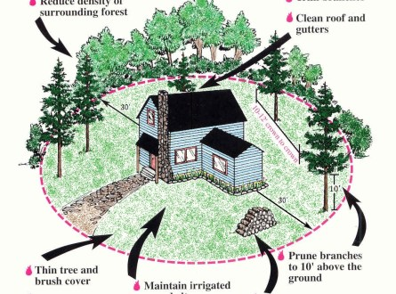 defensible-space-diagram from pcfd.org shows spacing of plants and trees and other materials in high fire risk areas