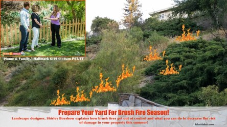 shirley-bovshow-landscape-design-expert-explains-how-to-prepare-for-brushfire-hillsides-home-and-family-edenmakers.com