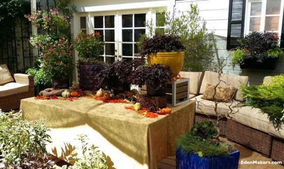 Patio-fall-containers-fall-foliage-jewel-toned-ceramic-pots-shirley-bovshow-edenmakers