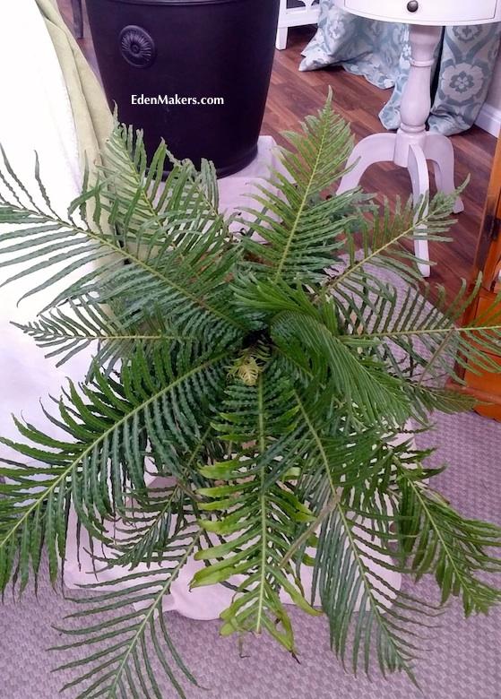 blechnum-fern-edenmakers-blog