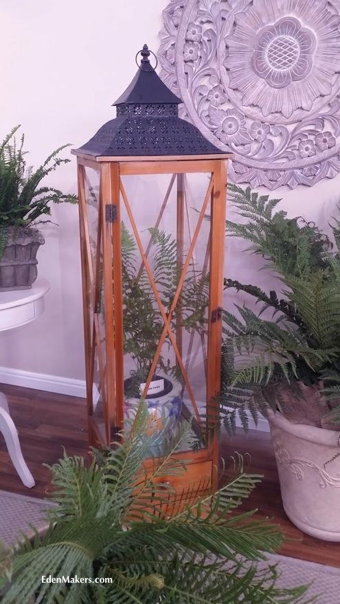fern-in-glass-wardian-case-new-zealand-tree-fern