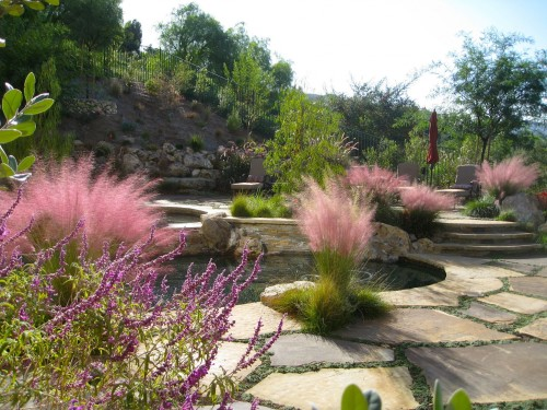Shirley-Bovshow-Garden-Designer-Ornamental-MUHLY-Grasses-For-Poolscape-EDENMAKERS-BLOG