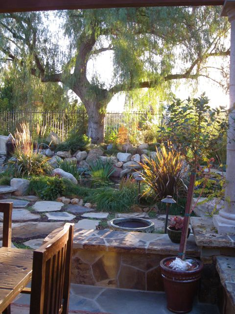 A California Pepper tree is the focal point above a naturalistic pond and gardens featuring ornamental grasses by Shirley Bovshow of EdenMakersBlog.com