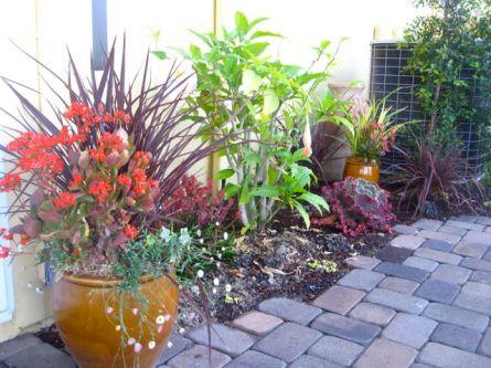 hot-garden2