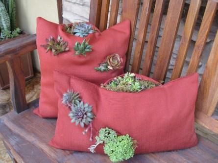 succulent planted in a pillow planter, exterior pillow
