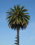 palm tree against sunny sky