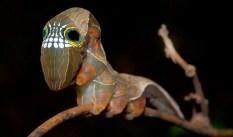 caterpillar10