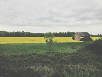 abandoned yellow