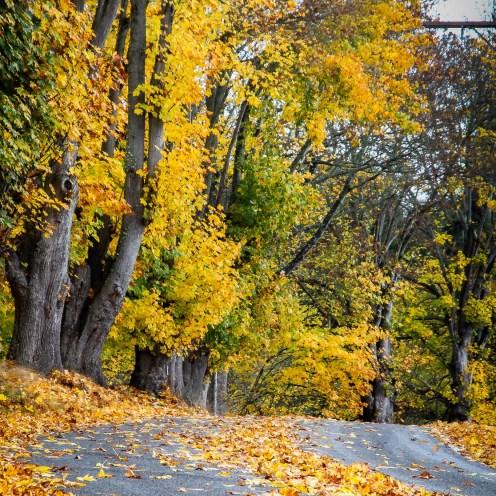 Newman Road