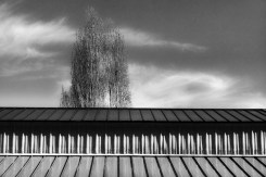 Tree Roof