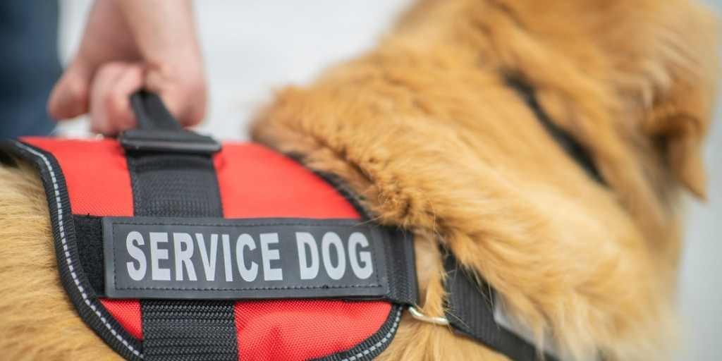 Fundraising Ideas for a Service Dog