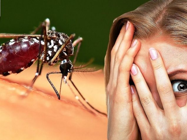 Insectophobia: How to fight insect fear