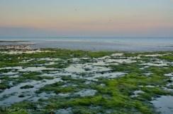 La textura del lecho marino, el mar y la luz de la tarde combinan muy bien en esta sencilla fotografía.
