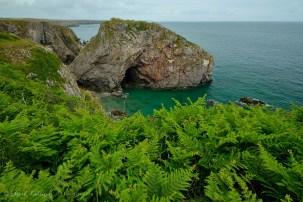 """El verde de este helecho, conocido en Venezuela como """"culantrillo"""", contrasta con el ambiente rocoso de las costas de del Sur-oeste de Gales."""