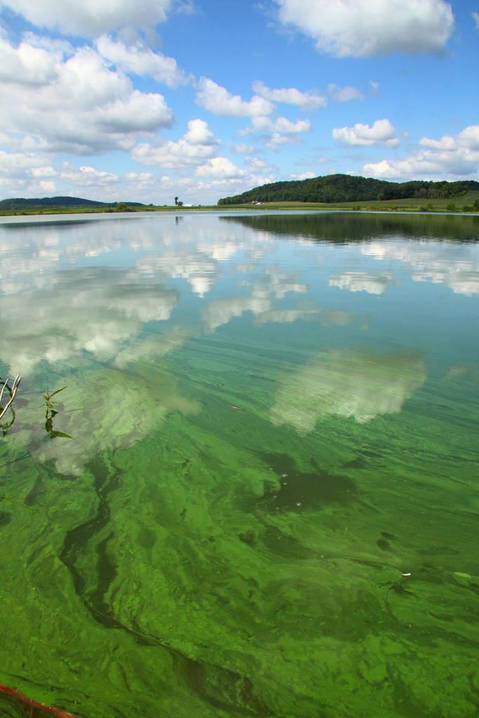 Algae Bloom at Fish Lake. Photograph by David H. Thompson, July 2010.